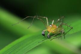 关于搜索引擎蜘蛛的工作原理你知道吗?