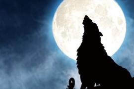 【微信引流】狼人杀的春天,抢夺流量的最好时机!